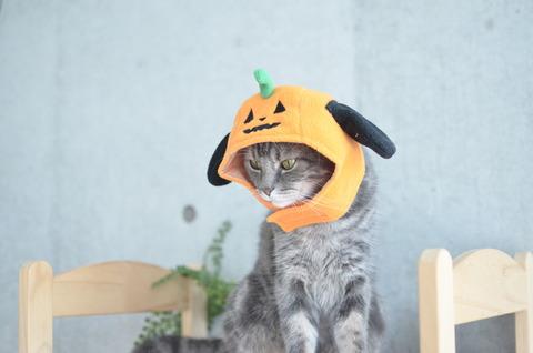 ハロウィンの予行練習!