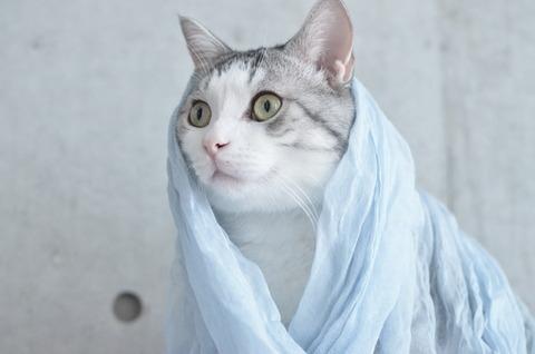 猫「そなたが落としたのは金の斧か?銀の斧か?」