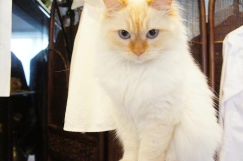 猫「ママさんは僕が守る」
