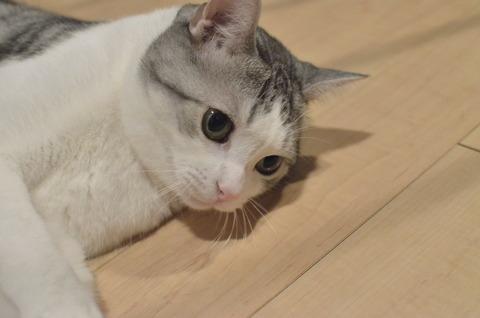 寝る前に猫と遊ぶと嬉しそうな顔をしてくれる