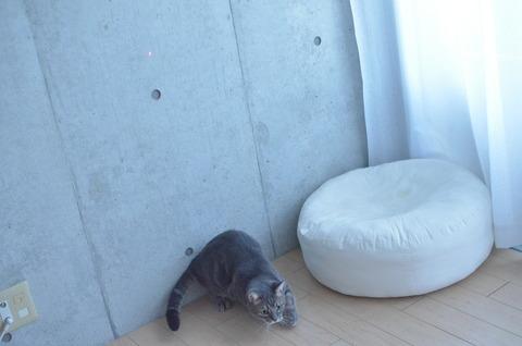 大ジャンプする猫の脚力がすごすぎる