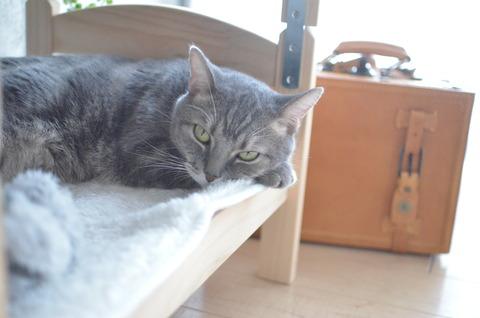 お気に入りの猫用二段ベッド