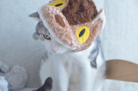 【業務連絡】リアル猫バス運行開始のお知らせ