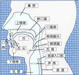 嚥下解剖図