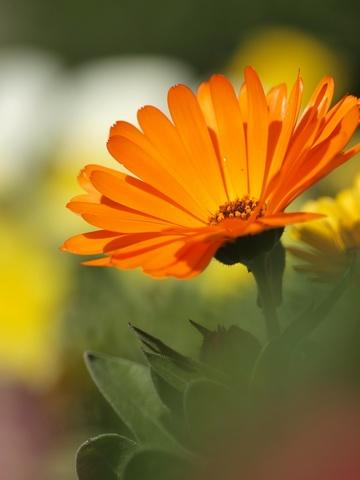 お花と前後ボケ。