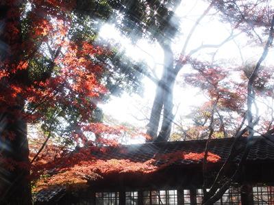 キラキラ紅葉。