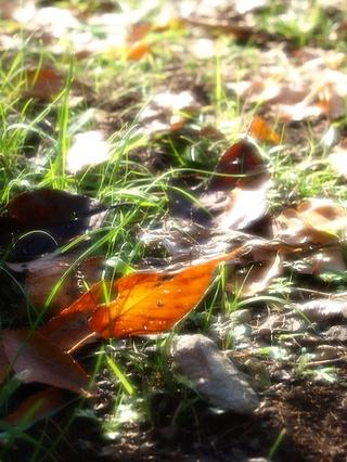 落ち葉とSILKY SOFT