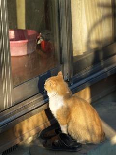 頼む、入れてくれ。