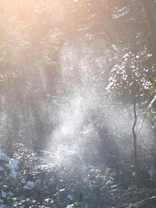 木に積もった雪が、さーっと落ちると、プチダイヤモンドダスト。