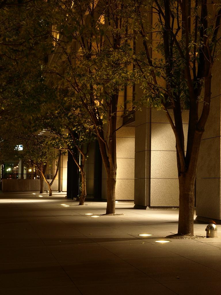 東京駅前の街路樹