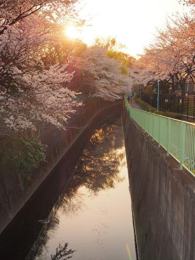 夕陽の川。