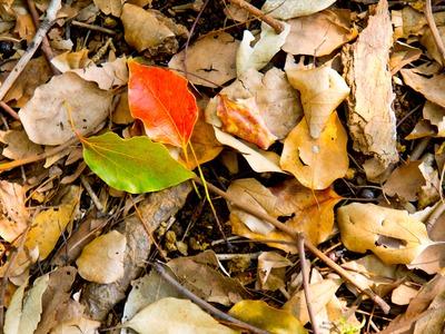 秋の彩り。