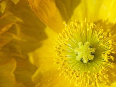 黄色のお花。