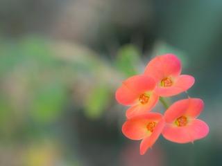 花の向こうに。