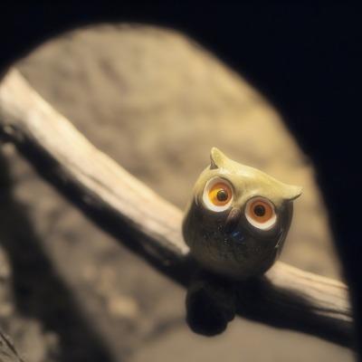 フクロウさん。