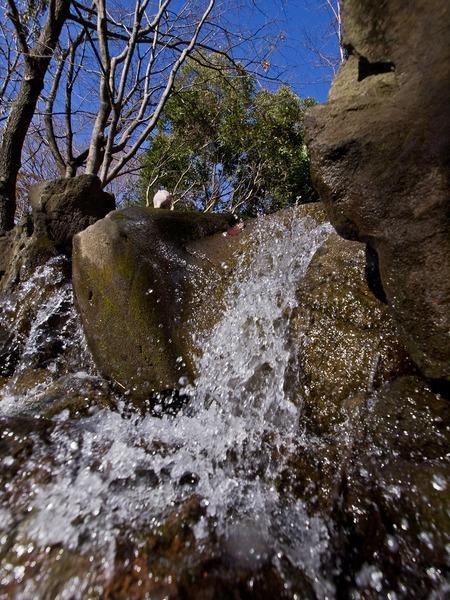 滝に佇むブタさん