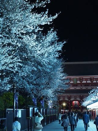 浅草寺の夜桜。