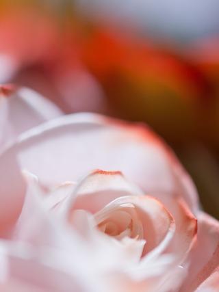 クリアな花びら。