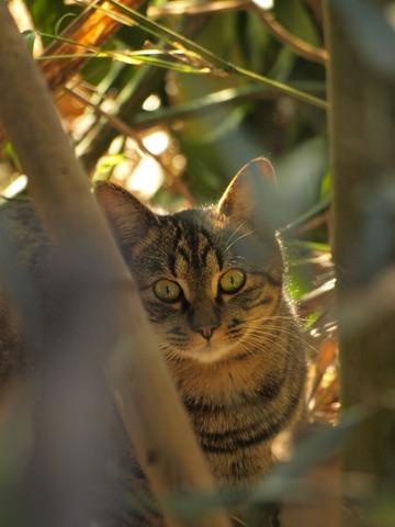 そんな、藪から猫な。