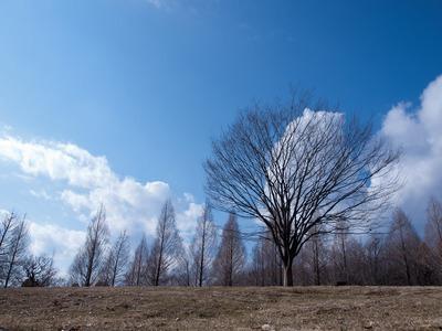 丘の上の木。