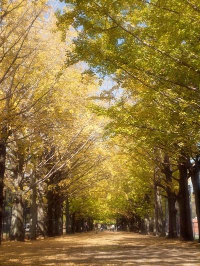 金色のトンネル。
