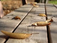 枯葉とベンチ