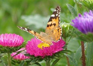 カラフル蝶