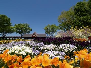 公園の花壇。