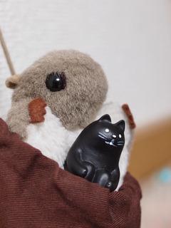 モモンガ&黒猫。