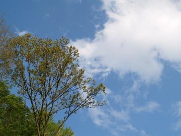 緑と空は大好物。