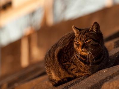 猫、黄昏。