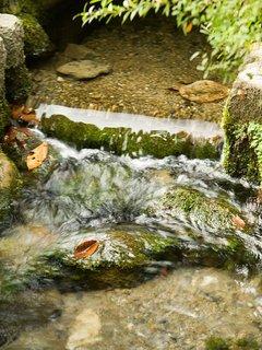 八雲神社の湧水