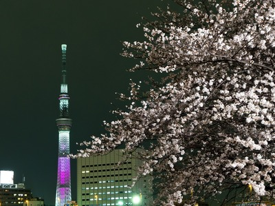 スカイツリー&夜桜