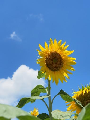真夏の太陽。