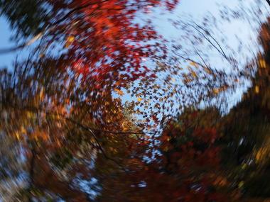 ぐるぐる紅葉。