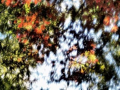 どらまちっく紅葉。