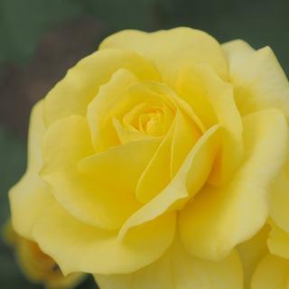 太陽の黄。