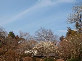 青空と白梅と庭園。