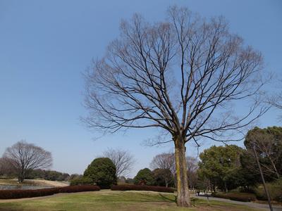 大きな空。大きな木。