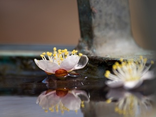 水に浮いた梅。