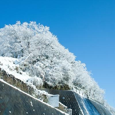 雪をまとって。