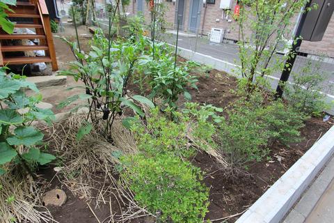 トマト、ナス、キュウリなどを育てている家庭菜園。