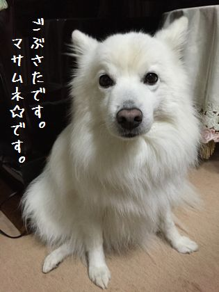 20141229_01