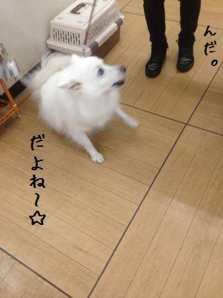 20141113 _04