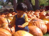 Liam pumpkin patch