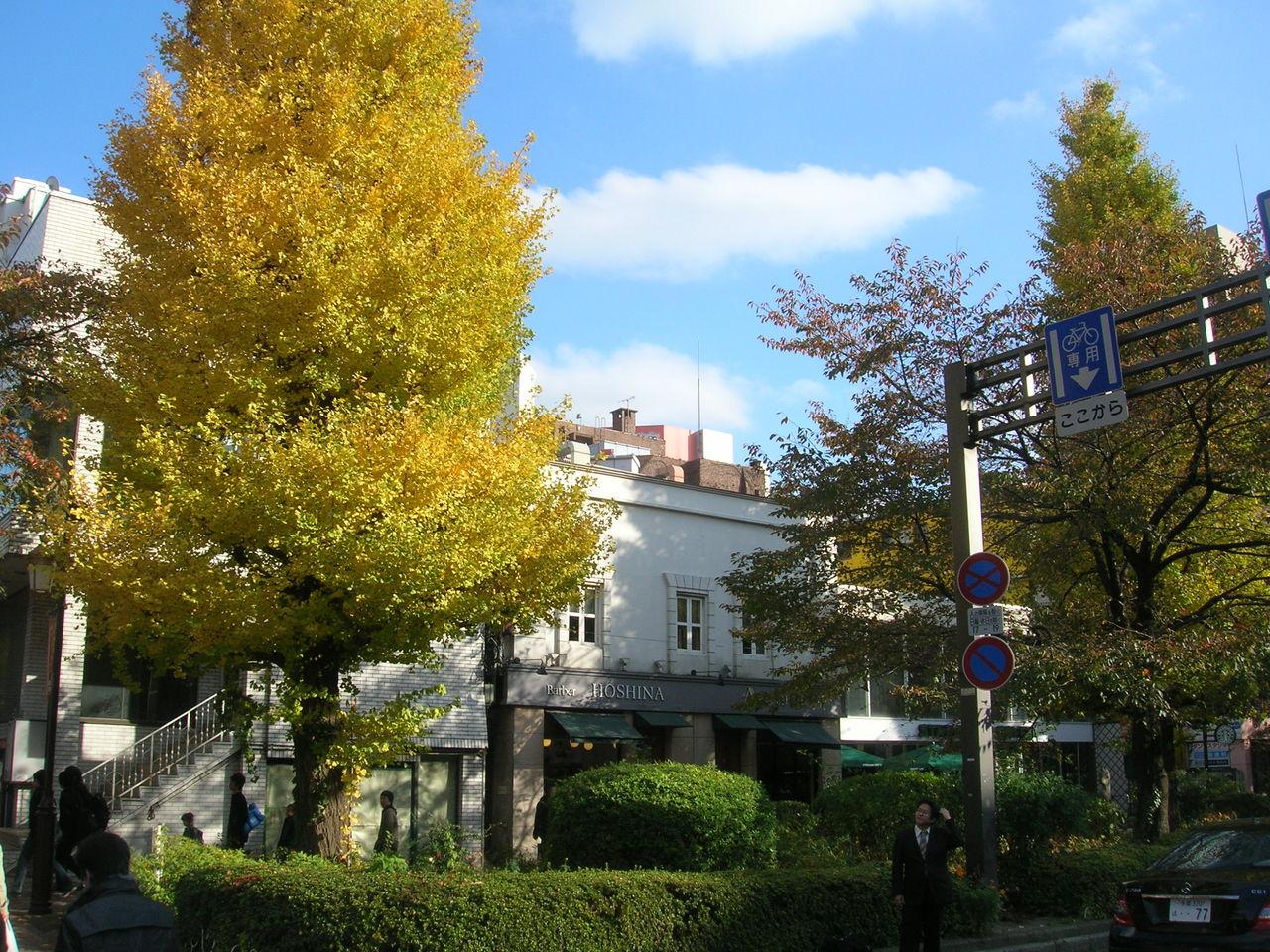 国立2010秋の「大学通り」 053