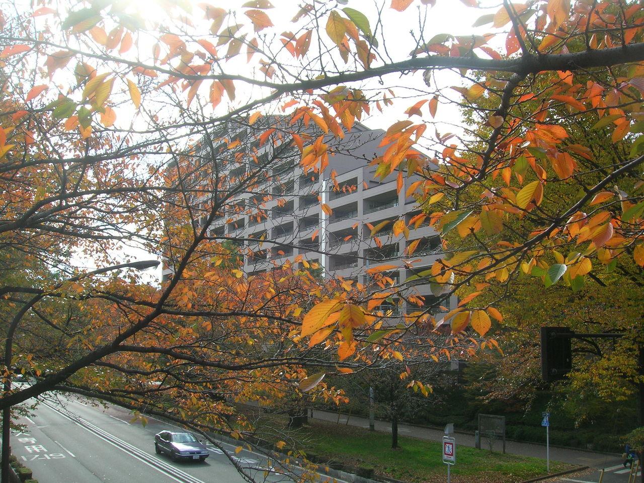 国立2010秋の「大学通り」 123