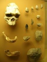 paleolithiqueinfer