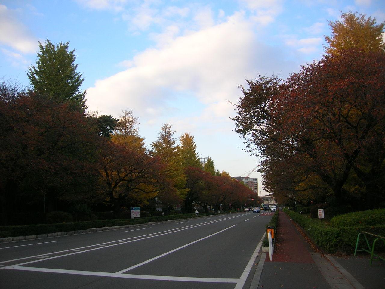 国立2010秋の「大学通り」 103