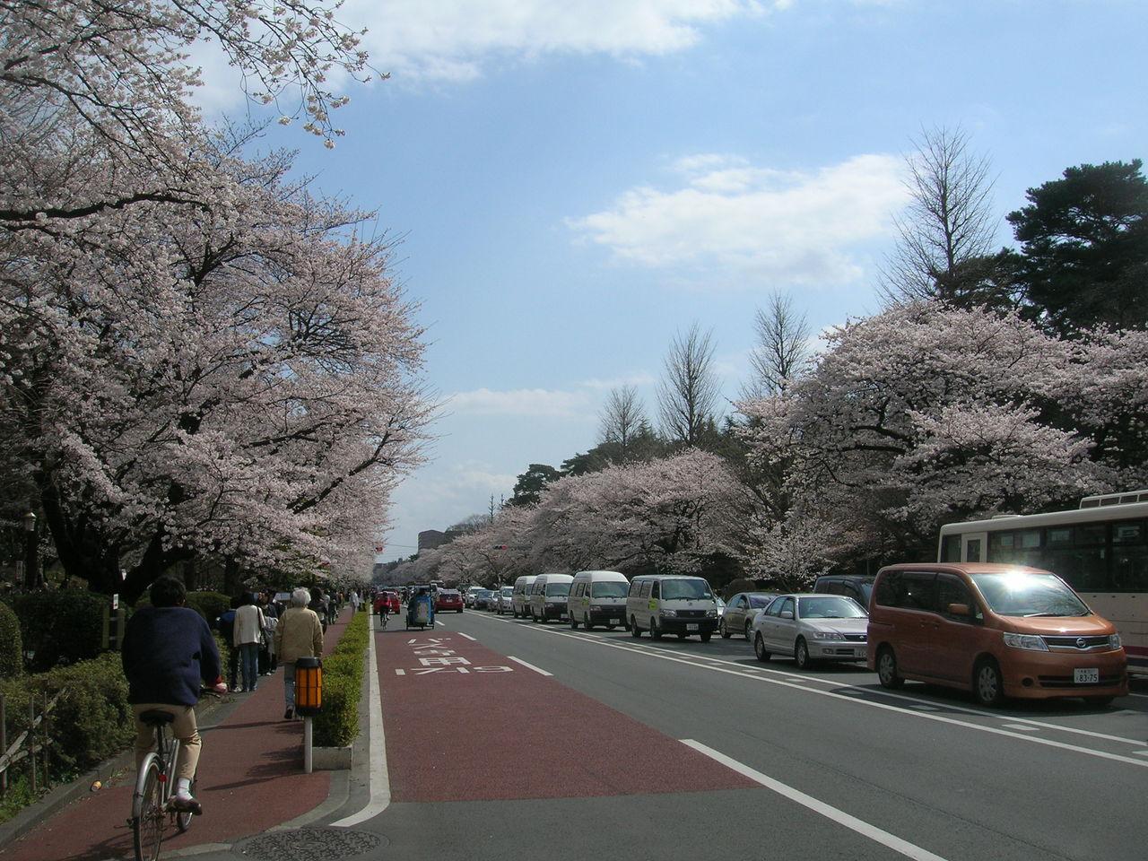 国立2010春桜満開 062